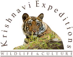 Krishnavi Expeditions